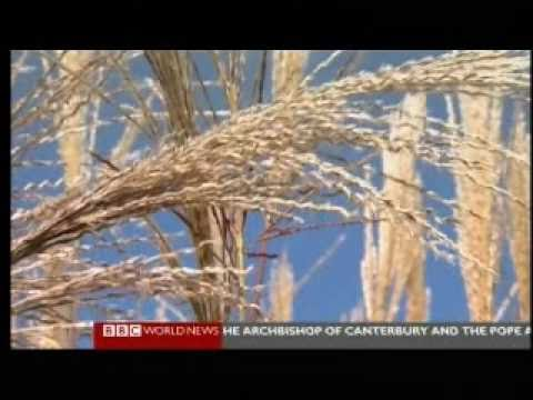 Hot Cities 12  Dakar Senegal 4  Feeding the World  BBC Environmental Documentary