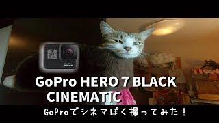 犬と猫の動画GoPro HERO7 BLACKで撮影、映画ぽいシネマティックムービー...