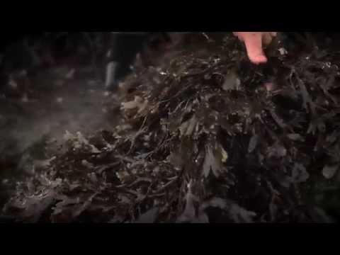 VOYA Organic Seaweed-based Skincare