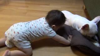 赤ちゃんにイタズラされ、骨をソファーの下に隠される.