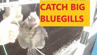 HOW TO CATCH REALLY BIG BLUEGILL MY BEST TRICKS AND TIPS