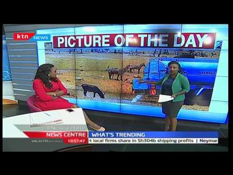 Kenyan taking water to the wildlife in Tsavo National park