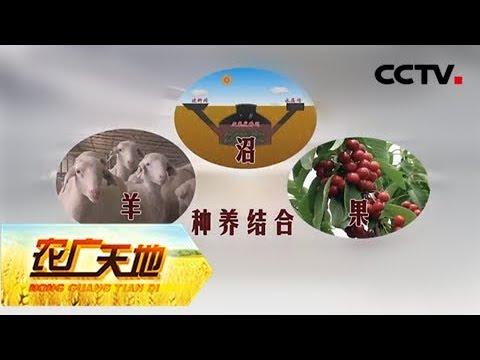 《农广天地》 20180110 畜牧—沼气—果树生产模式CCTV农业