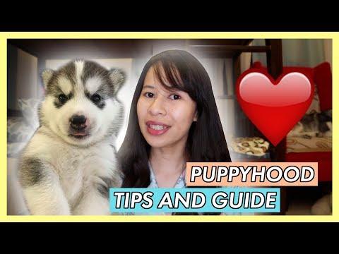 mga-dapat-gawin-pagkakuha-ng-bagong-puppy