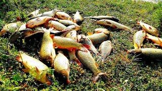 ЭТО ПРОСТО ЭЛЬДОРАДО 60 КГ РЫБЫ ЗА 2 ЧАСА рыбалка 2019
