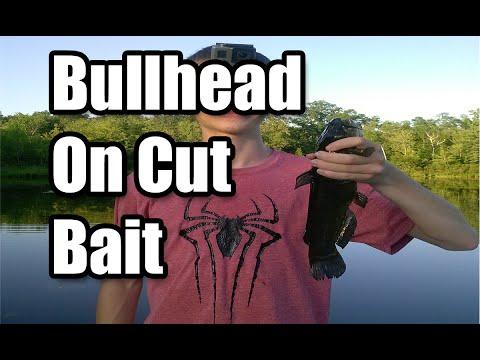 Fishing For Bullhead Catfish (Fishing With Cut Bait)