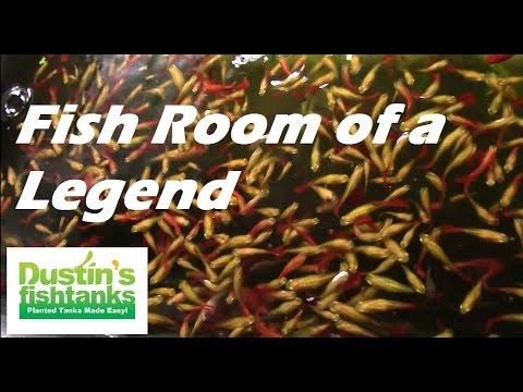 Fish Tank Room of a Legend Robert Steinbach