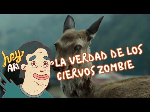 La verdad de los ciervos zombie - Hey Arnoldo
