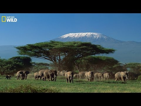 National Geographic Documentary - Wildlife of animals at Mount Kilimanjaro -  Wildlife Animals
