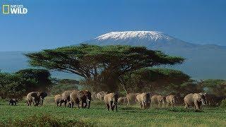 National Geographic Documentary - Wildlife of animals at Mount Kilimanjaro -  Wildlife Animals