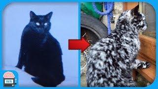 Er adoptierte eine schwarze Katze - 7 Jahre später passierte das Unglaubliche!