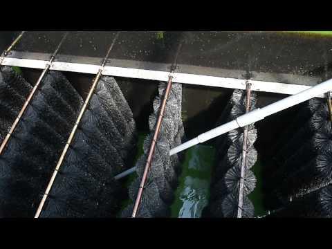 Modern Koi Blog #388 - So reinigt man Bürsten- und Biofilter