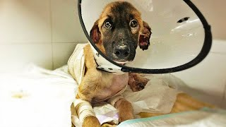 In memory of Tidus, a helpless victim of human cruelty!