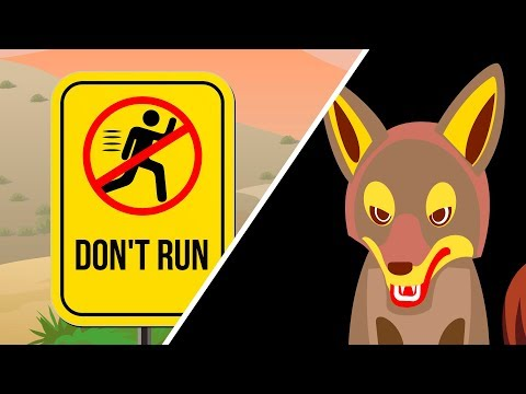 What to Do When You See a Coyote