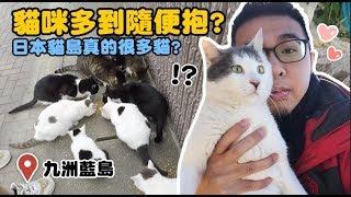 【貓咪多到隨便抱?九洲藍島真的很多貓?】狸貓 thumbnail