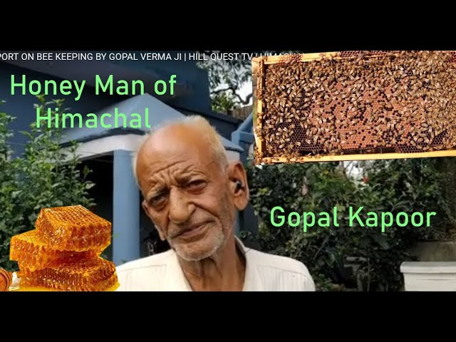 SPECIAL REPORT ON BEE KEEPING BY GOPAL VERMA JI   HILL QUEST TV   HIMACHAL PRADESH
