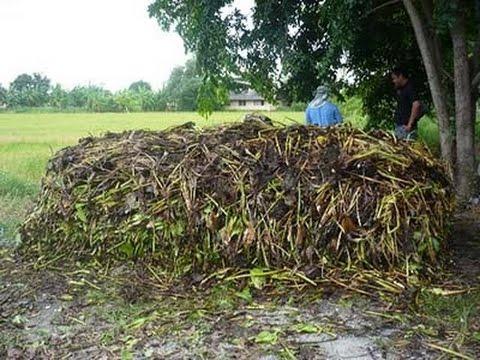 ทำปุ๋ยอินทรีย์ใช้เองทางรอดของเกษตรไทย