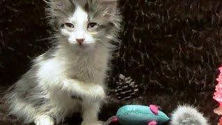 Бездомный котенок  Пух