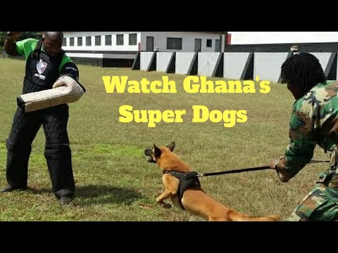 Amazing Dogs In Ghana ☀️
