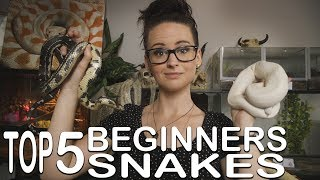 TOP 5 BEGINNERS SNAKE (I recommend´)