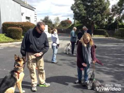 VIP Dog Teams Mickey🐾