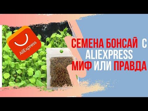 Семена БОНСАЙ с АлиЭкспресс Миф или реальность? Где купить семена бонсай?