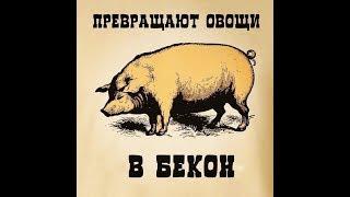 Свиная корейка на гриле (рецепт, пародия Глафиры Абрамовны)