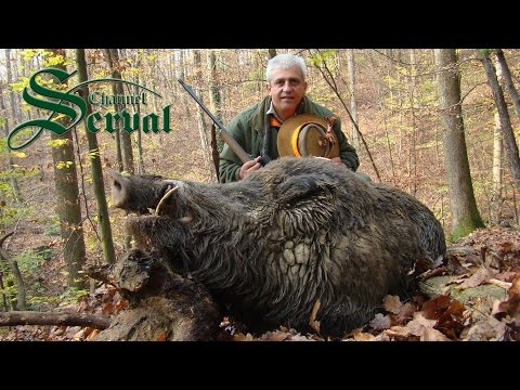 Hunting giant wild boars - TOP 10 shots