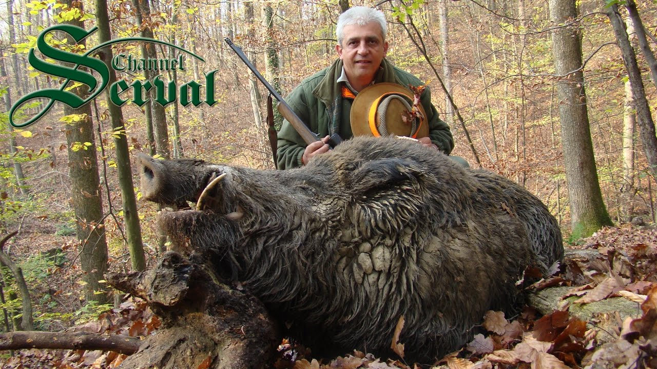 Hunting giant wild boars - TOP 10 shots - YouTube