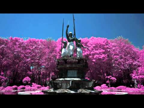 Infrared Photography: Bali Pink