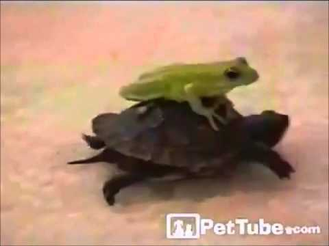 planets funniest animals youtube - photo #47