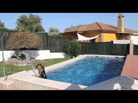 Pastor Alemán cámara oculta piscina-German Shepherd swimming pool hidden camera