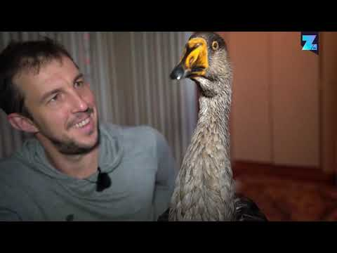 How a goose became my best friend