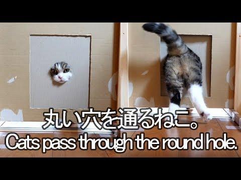 -Maru&Hana pass through the round hole.-