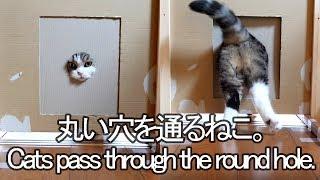 丸穴を通るねこ-maru-pass-through-the-round-hole