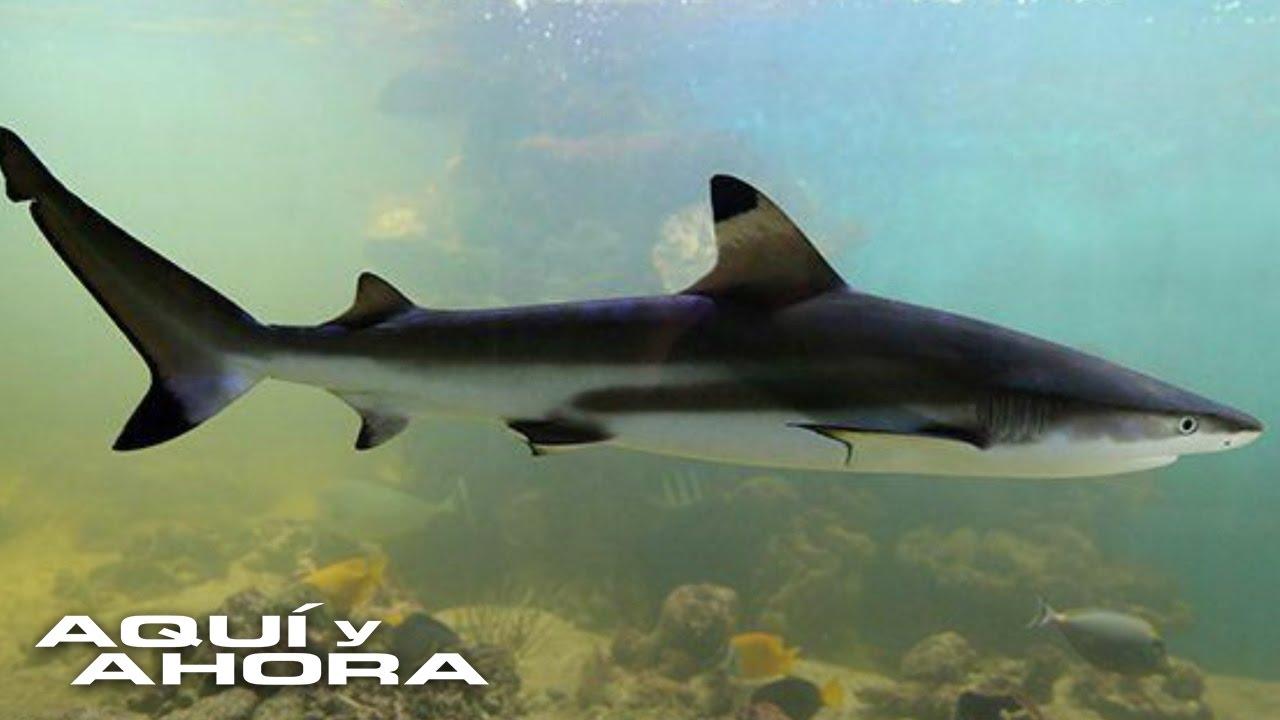 Son Realmente Efectivas Las Pastillas De Cartílago De Tiburón Youtube