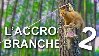 L'ACCROBRANCHE 2  -  PAROLE DE CHAT