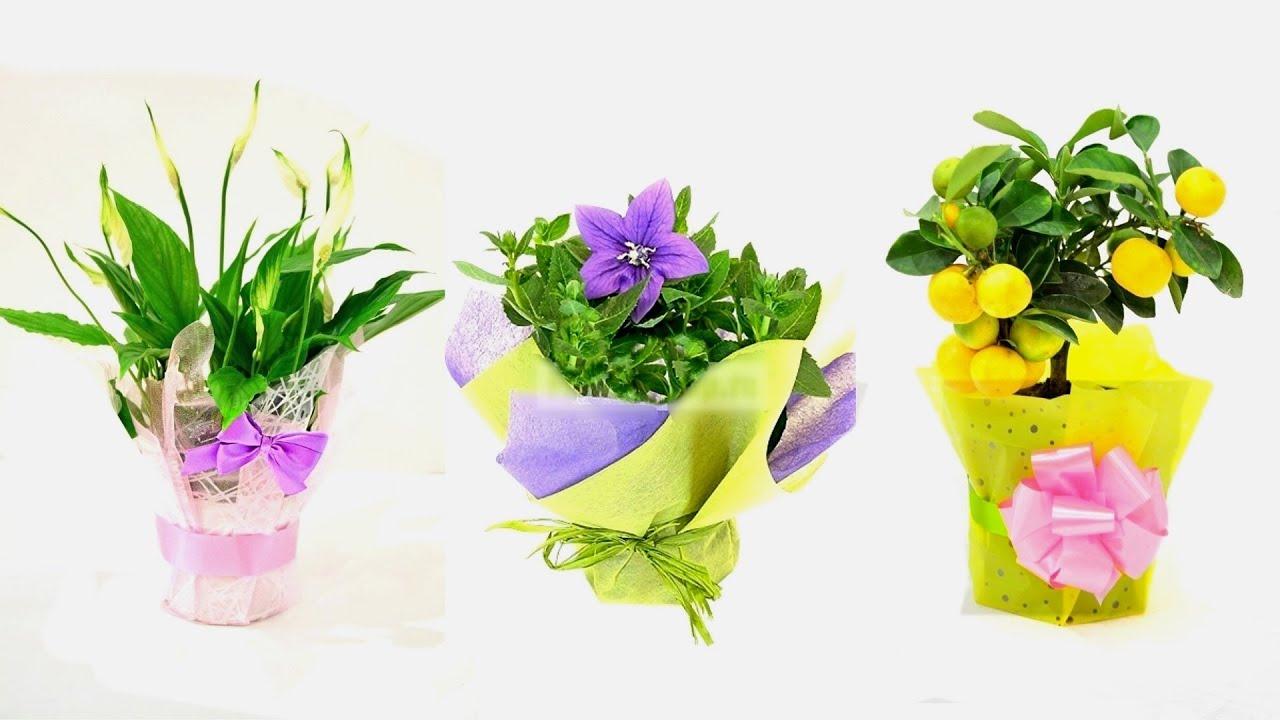 Как нужно сажать лилии » Все для дачи