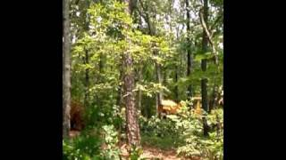 Pushing down a tree with a Caterpillar 953 Crawler Loader