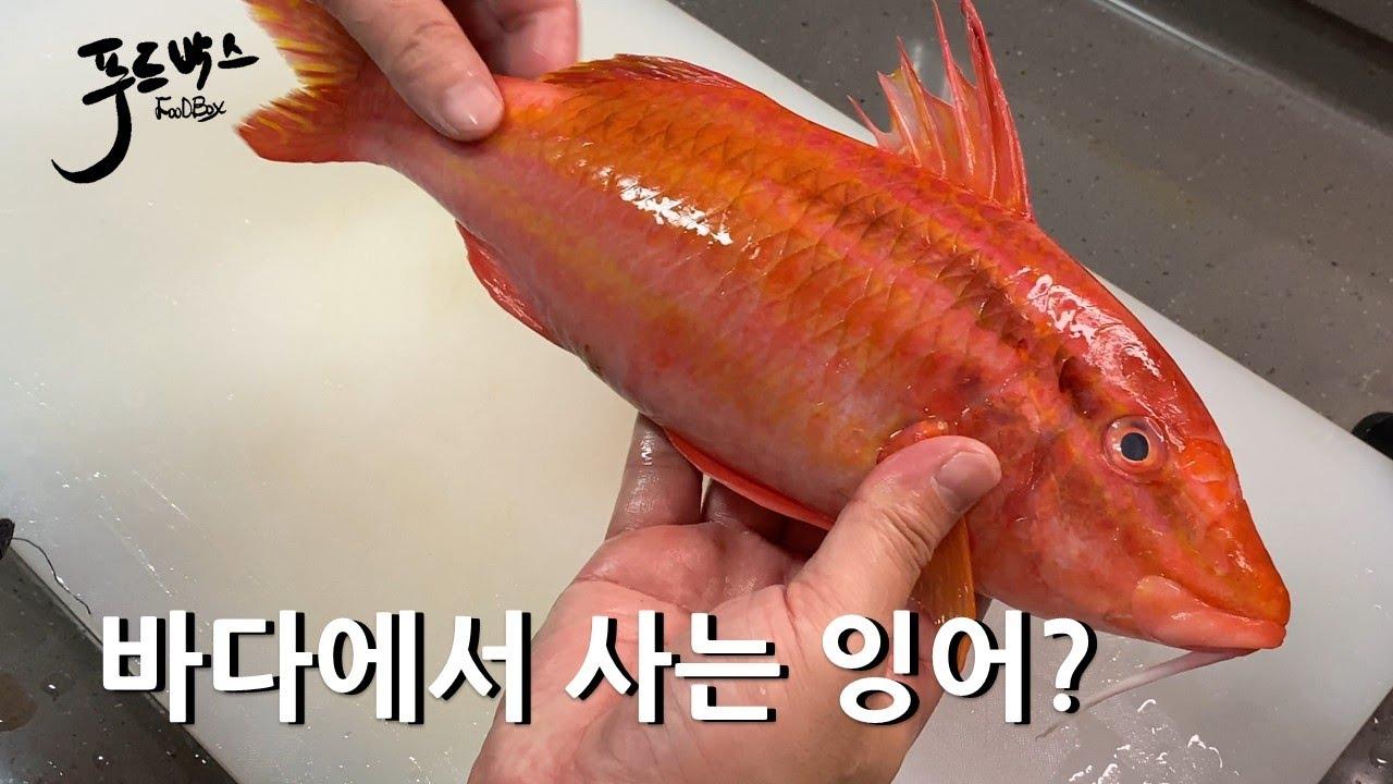 웃는 얼굴의 귀염 귀염한 녀석~ 과연 무슨 생선일까요?