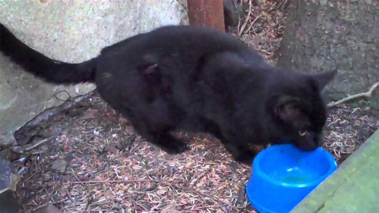 Remscheid Katze Zugelaufen Streuner Seit 2 5j Youtube