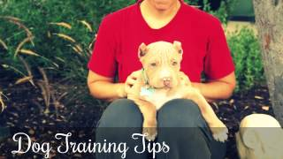 Dog Training Tips ♥♥♥ How To Potty Train Your Dog In 7 Days ♥♥♥