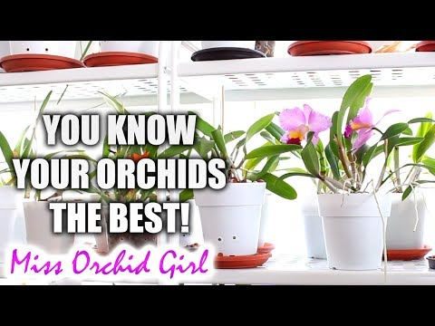 Context in solving Orchid problems - The red pigmentation + Mg deficiency theory