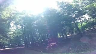 (경주) 메타세콰이어 숲에서...