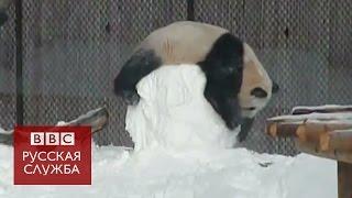 Панда против снеговика