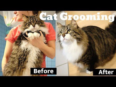Cat grooming - Siberian Cat Diamond bathing! Full grooming Guidelines & detailed Product Description