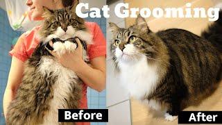 Cat grooming  Siberian Cat Diamond bathing! Full grooming Guidelines & detailed Product Description