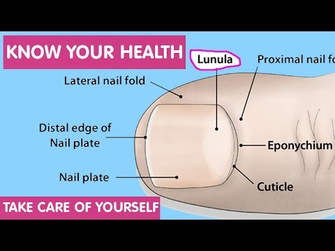 Lunula, The Sign on Our nail, Indicates Our Health Condition II Know Your Health Condition