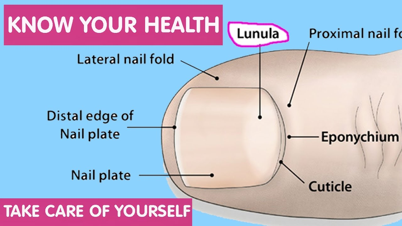Lunula the sign on our nail indicates our health condition ii lunula the sign on our nail indicates our health condition ii know your health condition pooptronica Gallery