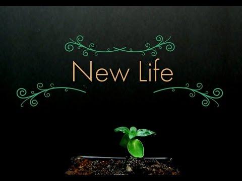 New Life - Short Film